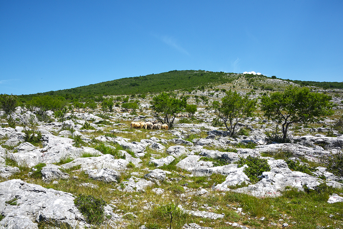Subalpine and Mediterranean Karst